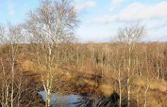 Ehem. Torfabbauflächen im Himmelmoor in Quickborn - Birkenwälder.