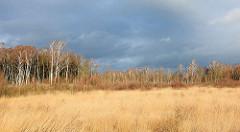 Wiese und Birkenwald in der Sonne - dunkler Regenhimmel über dem Himmelmoor in Quickborn.