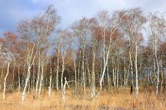 Birkenwälder im Himmelmoor in Quickborn, Schleswig-Holstein.