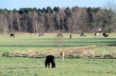 Pferdewiese beim Naturschutzgebiet Lütt Wittmoor in Henstedt Ulzburg.
