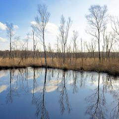 Moorlandschaft mit sich im Wasser spiegelden Birken - Naturschutzgebiet Lütt Moor / Henstedt-Ulzburg.