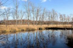 Moorlandschaft mit sich im Wasser spiegelnden Birken - Naturschutzgebiet Lütt Moor / Henstedt-Ulzburg.