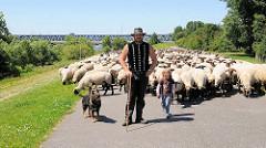 Schafsherde mit Schafshirten, Schafshirtin und Hütehund auf dem Finkenrieder Hauptdeich in Hamburg Wilhelmsburg - im Hintergrund die Eisenbahnbrücke über die Süderelbe.