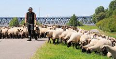 Schafsherde mit Schafshirten auf dem Finkenrieder Hauptdeich in Hamburg Wilhelmsburg - im Hintergrund die Eisenbahnbrücke über die Süderelbe.