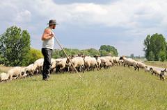 Hirte mit Hirtenstab - Schafsherde auf dem Moorwerder Hauptdeich in Hamburg Wilhelmsburg.