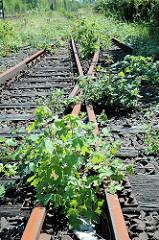 Stillgelegte Eisenbahngleise / überwucherte Weiche in Hamburg Wilhelmsburg.