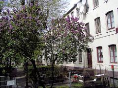 Blühender Flieder an den historischen Terrassenhäusern in der Talstrasse - der historische Wohnraum ist für den Abriss vorgesehen.