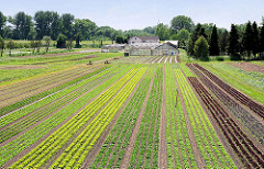 Salatfeld und Treibhäuser am Moorwerder Hauptdeich in Hamburg Wilhelmsburg - im Hintergrund der Deich an der Süderelbe. -