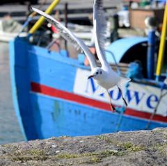 Fischkutter Möwe im Fischereihafen von Sassnitz - eine Möwe fliegt von der Kaimauer ab.