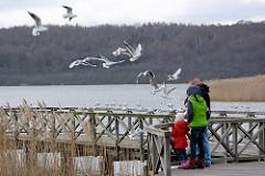 Möwen und Holzsteg am Schmachter See in Binz auf Rügen.