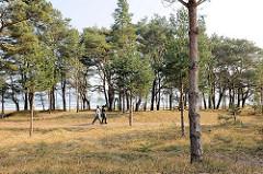 Mit Kiefern bewachsene Düne am Strand von Prora / Binz an der Ostsee; Spaziergängerinnen in der Frühlingssonne.