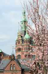 Frühling in der Hamburger Speicherstadt / Hafencity; blühende Japanische Zierkirsche, Fleetschlösschen und Kupferturm vom Speicherstadt-Rathaus.