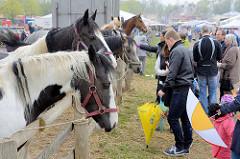 Angebundene Pferde auf dem Ochsenmarkt in Wedel -  BesucherInnen mit Kindern bei den Tieren.
