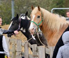 Angebundene Pferde auf dem Ochsenmarkt in Wedel.