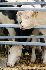 Ab Mitte des 15. Jahrhunderts erlangte Wedel größere Bedeutung durch den Ochsenhandel. Jeweils im Frühjahr wurden die Magerviehherden aus dem dänischen Jütland über den Ochsenweg nach Wedel getrieben, wo sie verkauft und über die Elbe verschifft wur
