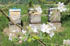 Apfelblüte im Alten Land - Europas größtem Obstanbaugebiet; Bienenkästen.