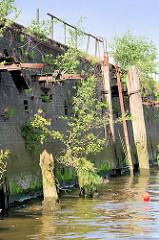 Alte Kaimauer am Reiherstieg im Hamburger Hafen - Reste von Holzdalben / Streichdalben sind mit Gras und Büschen bewachsen - Wildkraut wächst aus der Steinmauer; Eisenringe, Halterungen für Streichdalben ragen leer aus der Ziegelmauer.