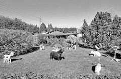 Schrebergartenidylle am Niendorfer Gehege - Rasen mit Tieren.