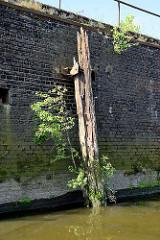 Ein alter verwitterter Holzdalben / Streichdalben an einer Kaimauer am Reiherstieg im Hamburger Hafen; Gras und junge Bäume wachsen aus dem Holzbalken.