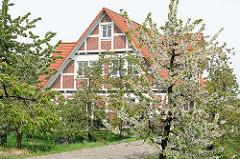 Wohnhaus mit Fachwerk - blühender Apfelbaum, Westerjork / Jork, Altes Land.