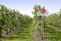 Apfelplantage - blühende Apfelbäume, Herzapfelhof im Alten Land / Jork.
