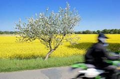 Motorradtour durch das Wendland im Frühling - blühende Rapsfelder und Apfelbaum in Blüte - blauer Himmel, Motorradfahrer.