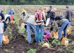 BesucherInnen des Kartoffelfests suchen auf einem Kartoffelacker vom Biohof Wulksfelde Kartoffeln.