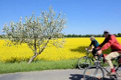 Frühlingstour mit dem Fahrrad durch das Wendland - blühende Apfelbäume am Strassenrand - gelbes Rapsfeld in Blüte.