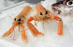 Foto vom Altonaer Fischmarkt in Hamburg - Der Kaisergranat (Nephrops norvegicus), auch Kaiserhummer oder Norwegischer Hummer genannt,[1] ist ein im Kontinentalschelf des Nordostatlantiks, des Mittelmeers und der Nordsee lebender Zehnfußkrebs. Er besi