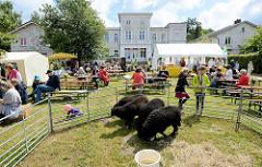 Wulksfelder Bauernmarkt - zahlreiche Aussteller mit regionalen Bioprodukten und Kunsthandwerk; Schafe in einem Pferch.