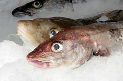 Bilder vom Hamburger Fischmarkt - Fische auf Eis.