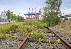 Schienen der Güterbahn in Hamburg Waltershof - die Gleise sind mit Grünpflanzen, Brombeeren überwuchert - im Hintergrund Containerkräne am Eurogate Terminal.