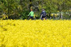 Frühling im Wendland - Fahradfahrer / Fahrradfahrerin im blühenden Rapsfeld.