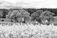 Landschaft im Wendland - blühender Raps - Bäume am Feldweg, Wald im Hintergrund / Schwarz Weiss Fotografie.