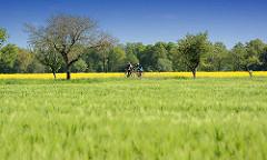 Radtour im Frühling durchs Wendland - Fahrt durch Wiesen und Felder, blühender Raps.