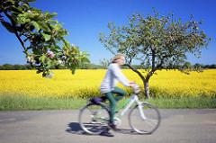 Radtour im Wendland - blühender Raps und Apfelbäume / Apfelblüten an der Strasse.