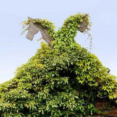 Giebel mit Pferdeköpfen, bewachsen mit Rankpflanzen - Motive aus dem Wenland.