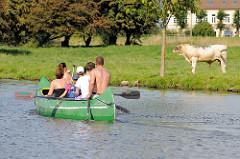 Kanufahrt auf der Dove-Elbe in Hamburg Curslack - eine Viehweide geht bis an das Wasser - ein Jungbulle steht unter einem Baum; im Hintergrund ein Wohnhaus hinter dem Deich.