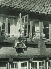 Historische Bilder aus dem Hamburger Gängeviertel - geöffnete Fenster im Schulgang, ein Vogelbauer hängt in der Sonne - ein kleines Mädchen blick hinaus.