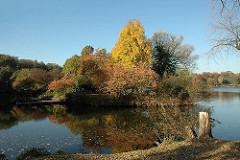 Herbststimmung am Hamburger Stadtparksee - die Bäume der Liebesinsel sind herbstlich gefärbt.