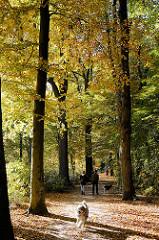 Spaziergänger mit Hund im Herbstlaub - hohe Bäume mit gelben / goldenen Herbstblätter am Grasweg in Hamburg Winterhude.