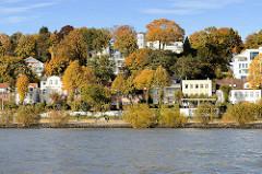 Elbufer in Hamburg Othmarschen - Wohnhäuser am Elbufer in Oevelgönne - Bäume mit herbstlich gefärbten Blättern am Elbhang.