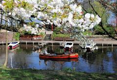 Kirschblüte im Frühling - blühender Kirschbaum bei der Liebesinsel im Stadtpark in Hamburg Winterhude.