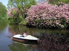 Japanische Zierkirschen blühen auf der Liebesinsel am Hamburger Stadtparksee - Tretboot.