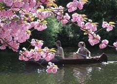 Rosafarbene Blüten der Japanischen ZIerkirsche im Stadtpark Hamburgs - Kanu auf dem Stadtparksee.