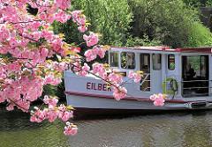 Das Alsterschiff Eilenau mit Fahrgästen auf einer Frühlingsfahrt beim Hamburger Stadtparksee - Blüte der Zierkirsche.