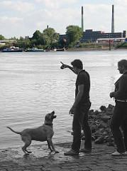Ein Hund spielt mit seienm Herrchen am Wasser der Norderelbe an der Slipanlage von Entenwerder. Im Hintergrund die Industriearchitektur auf der Peute / Veddel.