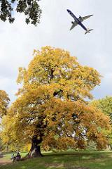 Herbstbaum im Jenischpark von HH-Othmarschen; Einflugschneise für den Flughafen Finkenwerder.
