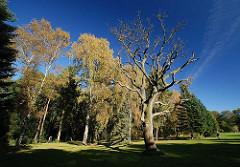 Gefärbtes Herbstlaub - kahler Baum / blauer Himmel im Hamburger Stadtpark.