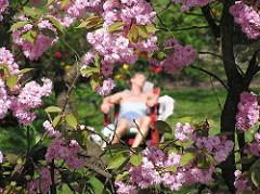 Blüte der Japanischen Zierkirsche im Hamburger STadtpark - Liegestuhl auf der Liebesinsel am Stadtparksee